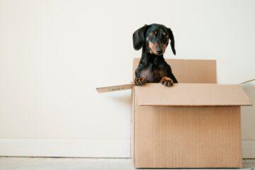 költöztetés, kutya dobozban